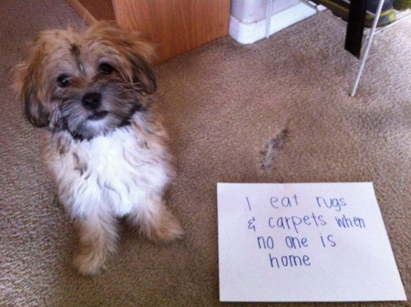 Find Out About Top 10 Funny Messages Dog Has For You