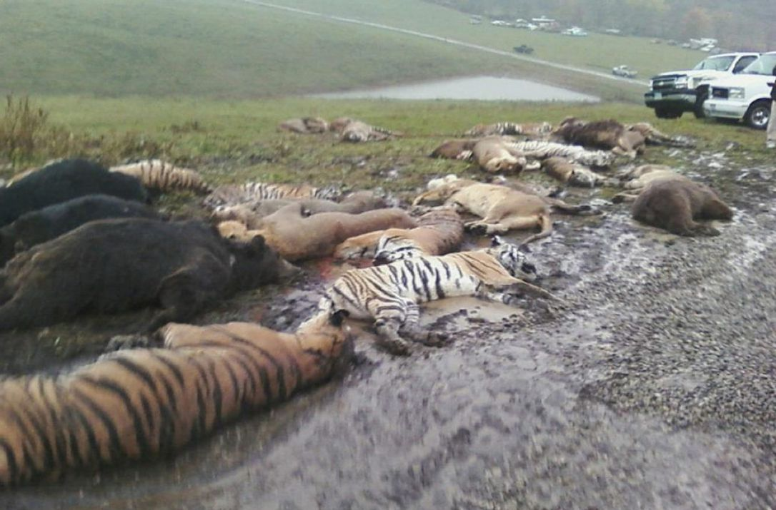 Природа умирает молча. Фото-доказательства того, как человек убивает природу