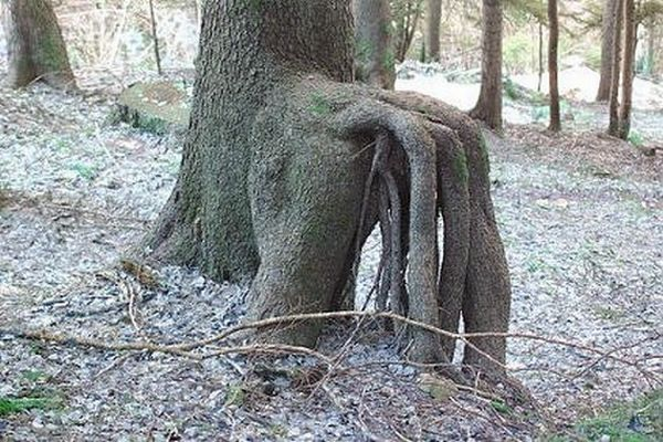 Trees Growing In Strange Places