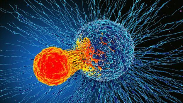 Открытие: Иммунная система может лечить все виды рака