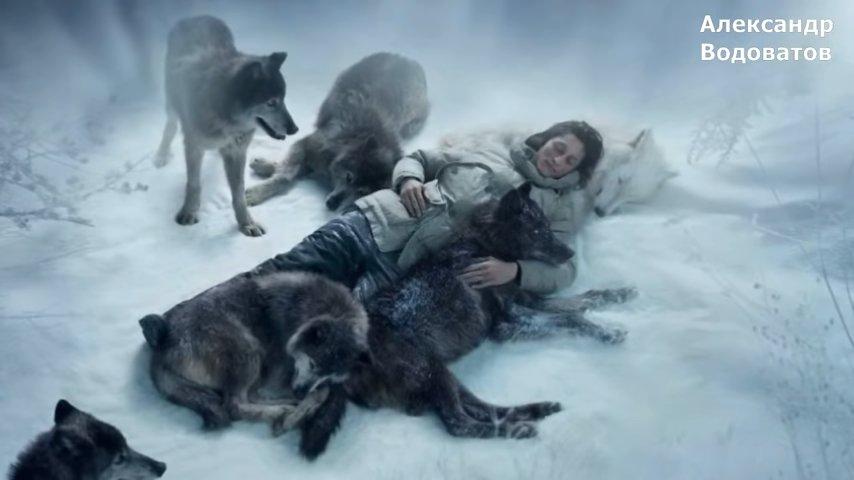 Беременная женщина попала в аварию и могла замерзнуть от страшного холода, но ее спасли волки!