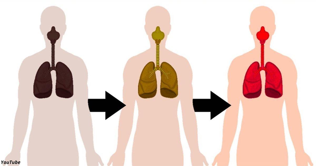 Отказ от курения пробуждает здоровые клетки лёгких — они регенерируются