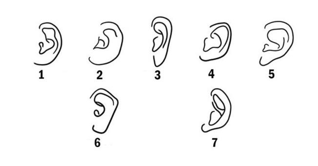 Самый информативный Тест «Форма Уха»: раскроет изюминку вашей уникальности