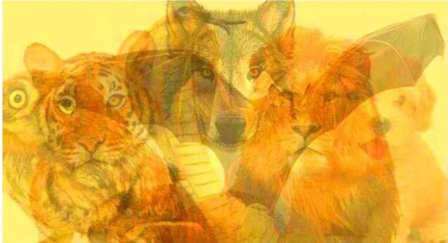 Тест. Животное, которое вы увидите первым, расскажет о вашем характере