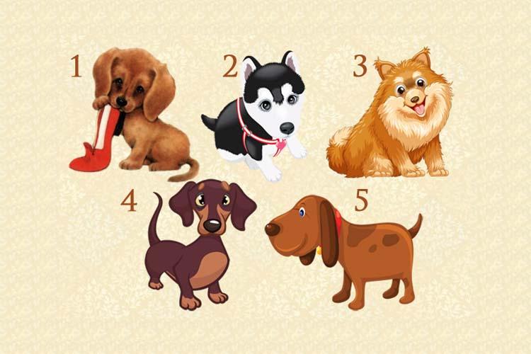 Загадав желание выберите собачку и узнайте сбудется оно или нет