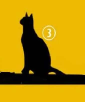 Забавный личностный тест: Выберите кошку и узнайте вашу цель жизни...