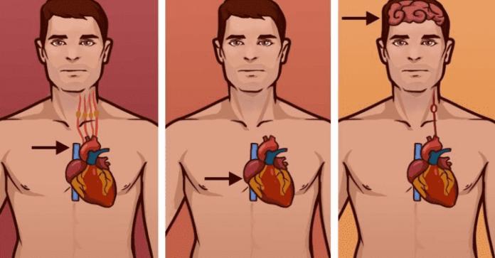 Инфаркт, остановка сердца, инсульт: знание различий спасает жизнь